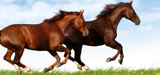 Header_Heste